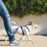 Does Walking 1 Hour Every Day Aid Weight Loss?